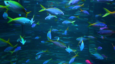 school of many fish in aquarium Stock Video Footage