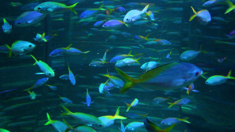 school of many fish in aquarium Footage