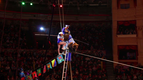 bear rope-walker perfomance in circus Stock Video Footage