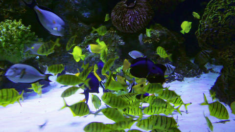 tropical fish feeding underwater Footage