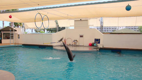 dolphin show - dolphins jumping through ring Stock Video Footage