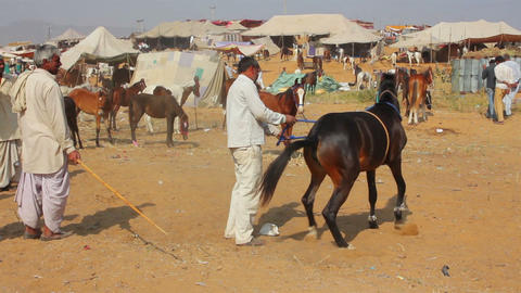 Indian man raised his horse at Pushkar camel fair Stock Video Footage