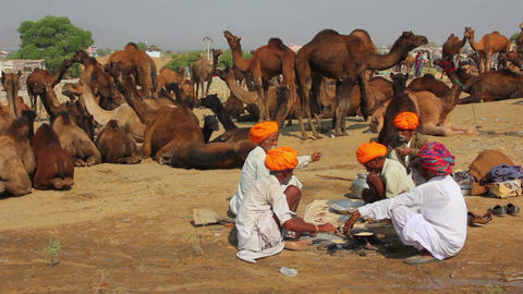 Pushkar Camel Fair - sellers of camels during fest Footage