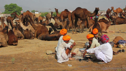 Pushkar Camel Fair - sellers of camels during fest Stock Video Footage