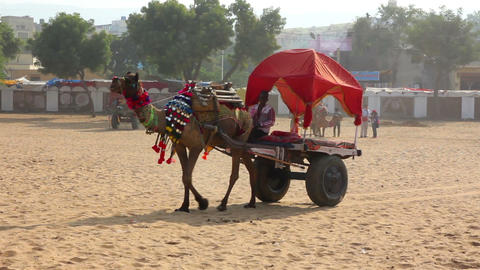 camel with cart at fair in Pushkar India Stock Video Footage