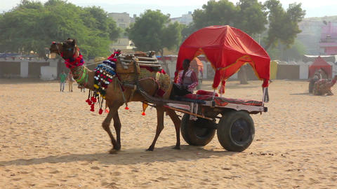 camel with cart at fair in Pushkar India Footage