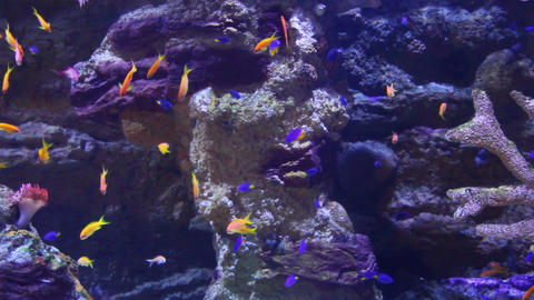tropical fish and corals underwater Stock Video Footage