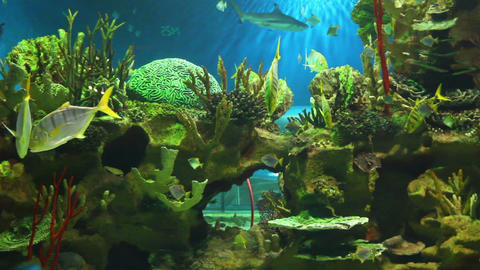 view in oceanarium Stock Video Footage