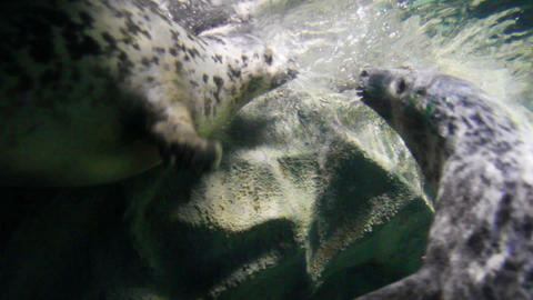 playing young seals underwater Stock Video Footage
