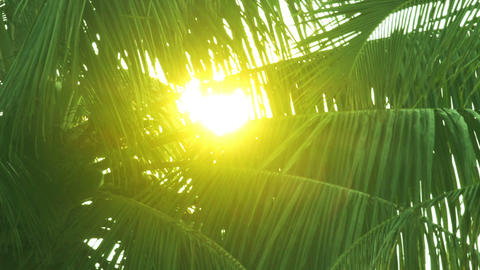 sun is shining throgh palm leaves Footage