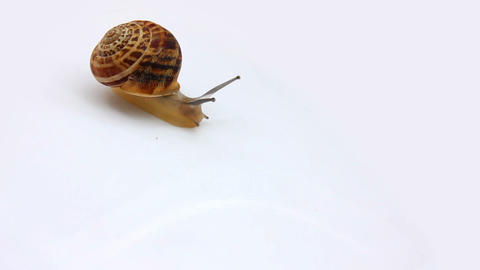 snail moving on white Stock Video Footage