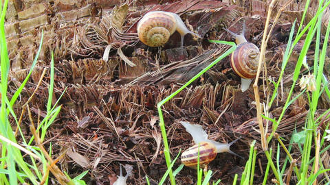 snails in grass - timelapse Stock Video Footage
