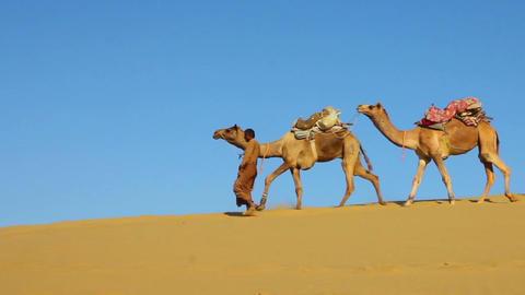 cameleers in desert - camels caravan on sand dune Stock Video Footage