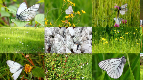 set of many beautiful butterflys and ladybugs Stock Video Footage