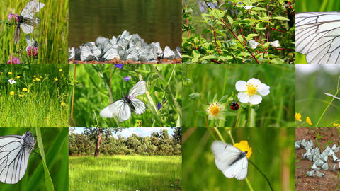 set of many beautiful butterflys and ladybugs Footage