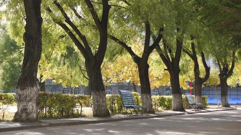 Heihexueyuan Trees Stock Video Footage