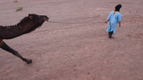 Camel Ride, Morocco Footage