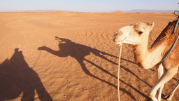 Camel Ride, Morocco Stock Video Footage