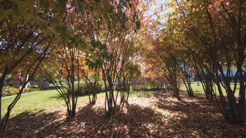 Autumn day in Longbin park Stock Video Footage