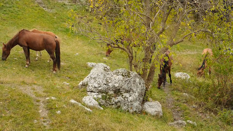 Wild horses graze in the mountains Stock Video Footage