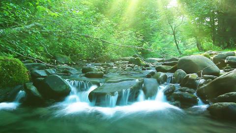 Forest Stream Footage