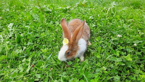 Rabbit Stock Video Footage