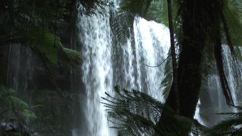 waterfall in tasmania rain forest in mount field n Stock Video Footage