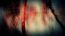 A Spiders Web Footage