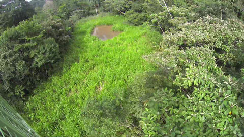 Aerial over a forest Stock Video Footage