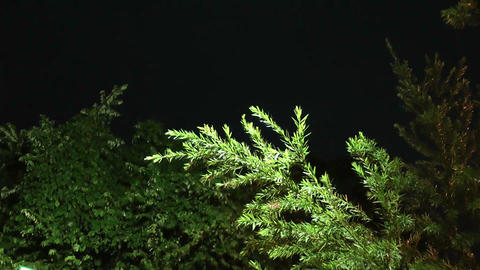 A night scene at a forest Stock Video Footage