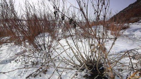 Wild snowfield Stock Video Footage