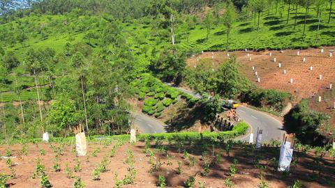 road between tea plantations in Munnar Kerala Indi Stock Video Footage
