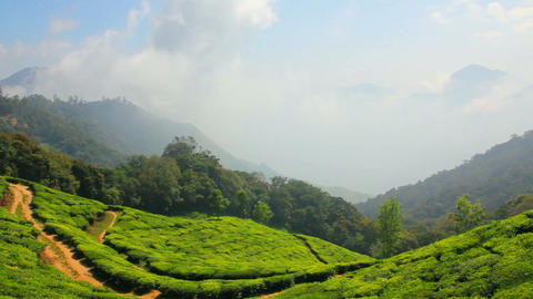 mountain tea plantation in Munnar Kerala India Footage