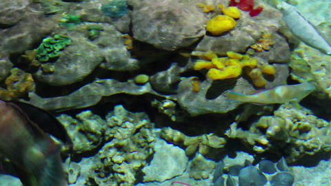 fish and corals in shallow Stock Video Footage