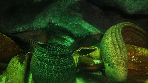 moray fish underwater close-up Stock Video Footage