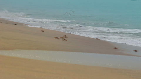 many crabs on the beach Stock Video Footage