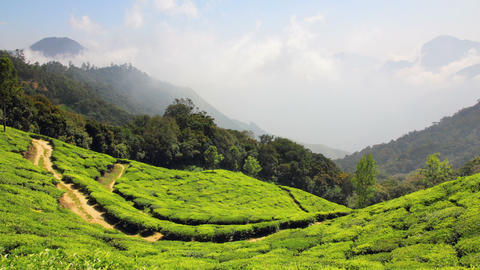 mountain tea plantation in Munnar Kerala India - t Stock Video Footage