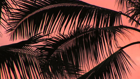 Palm Fronds Stock Video Footage