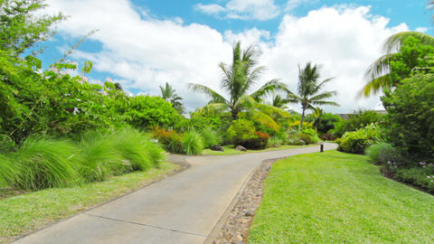 tropical landscape Stock Video Footage