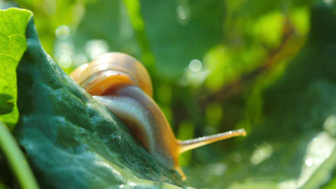 snail in the green grass Stock Video Footage