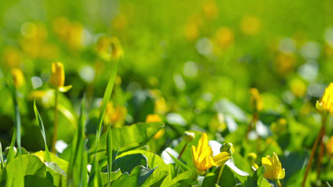 grass and flowers Stock Video Footage