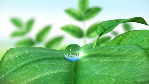 Dewdrop on leaf, Beautiful animation. HD 1080 Animation