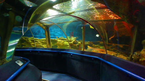 oceanarium Stock Video Footage