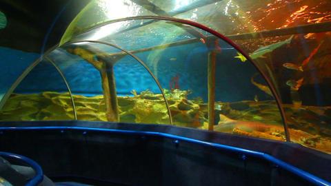 oceanarium Footage