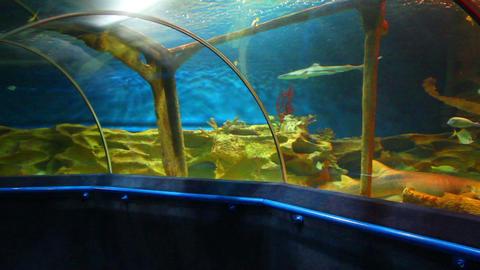 oceanarium Stock Video Footage