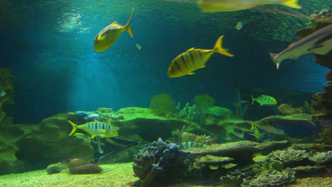 oceanarium - timelapse Stock Video Footage