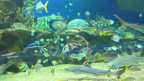 oceanarium - timelapse Footage