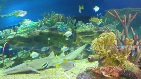 oceanarium - timelapse Stock Video Footage