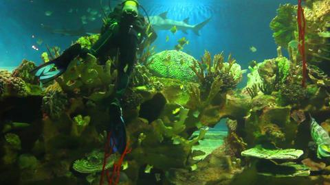 diver in oceanarium Stock Video Footage
