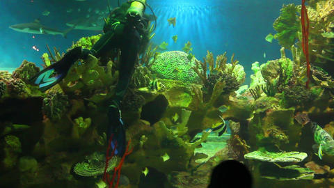 diver in oceanarium Stock Video Footage
